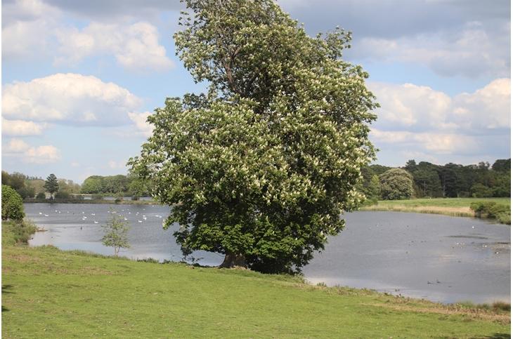 Howards Meadow, Kings Cliffe, Peterborough